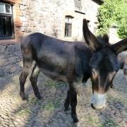 Bild eines Esels
