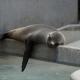 Bild einer schlafenden Robbe