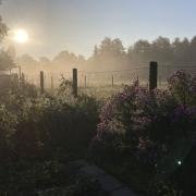 Gartenblick im Frühnebel